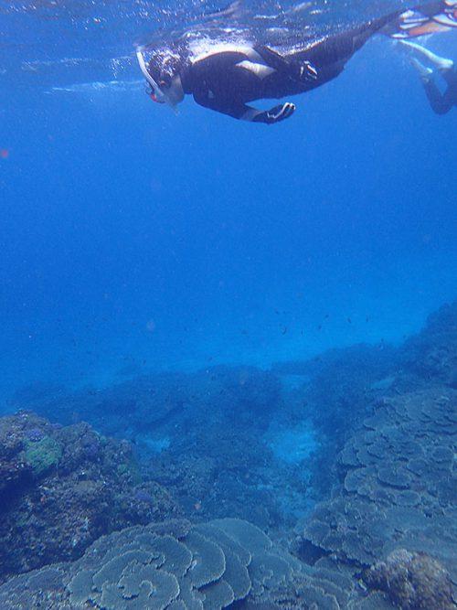 サンゴと砂地をグルッと周り