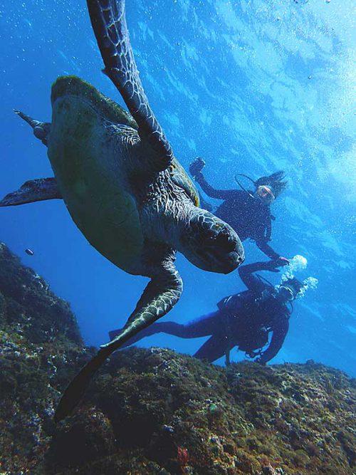 帰りに泳ぐウミガメ見かけたり
