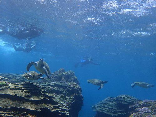 今日はウミガメたくさんで
