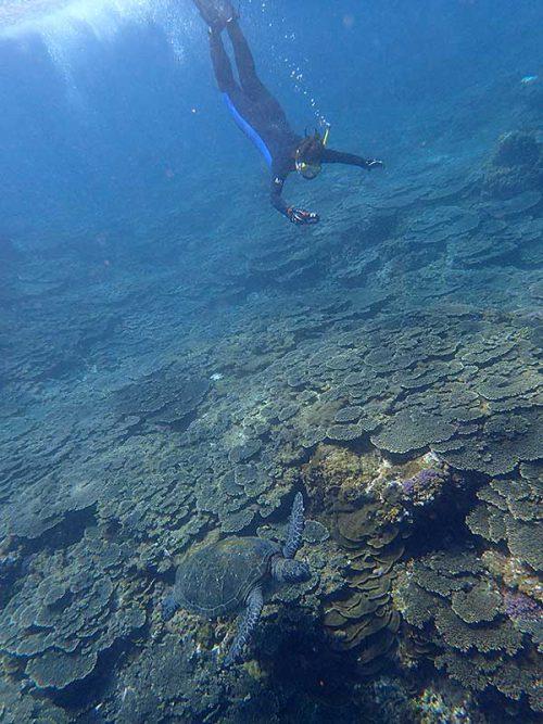 ちょっと潜ってウミガメ撮って