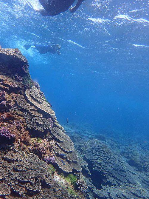 サンゴのとこも泳いで周り