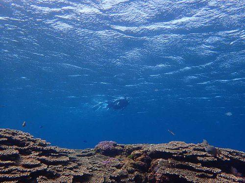 水も綺麗な底土の海で