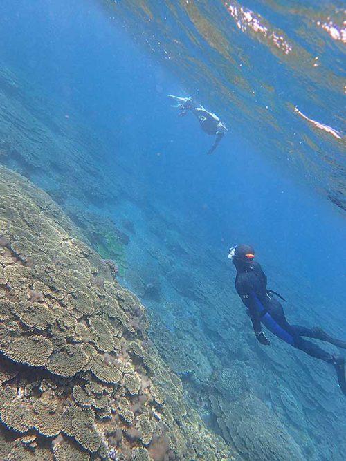広がるサンゴを見ながら泳いで周り