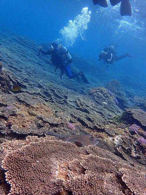 サンゴの上にヤッコエイ