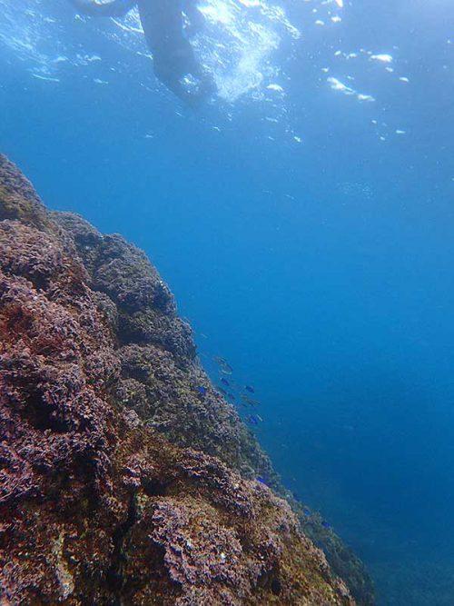 根上に集まる魚も見つつ沖へ出て