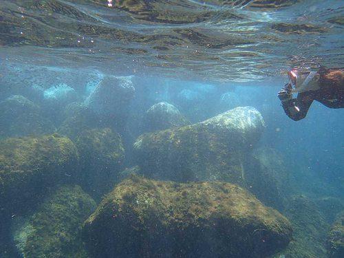 水面付近には小魚群れておりまして