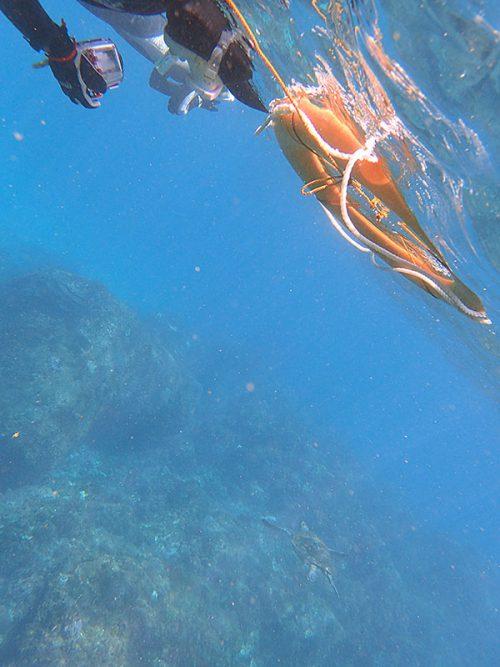 泳ぎ去ってたアオウミガメ