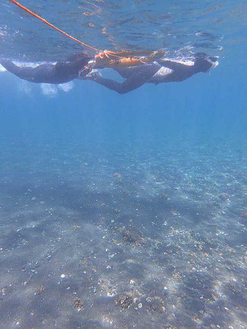砂地を泳いでいきまして