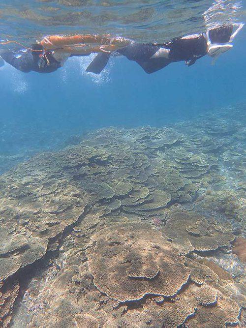 サンゴの広がるちょっと沖まで出ていって