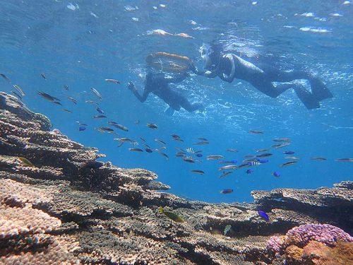 コガシラベラとか色々魚も集まっていて