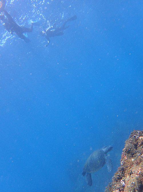 上からウミガメ見てみたり