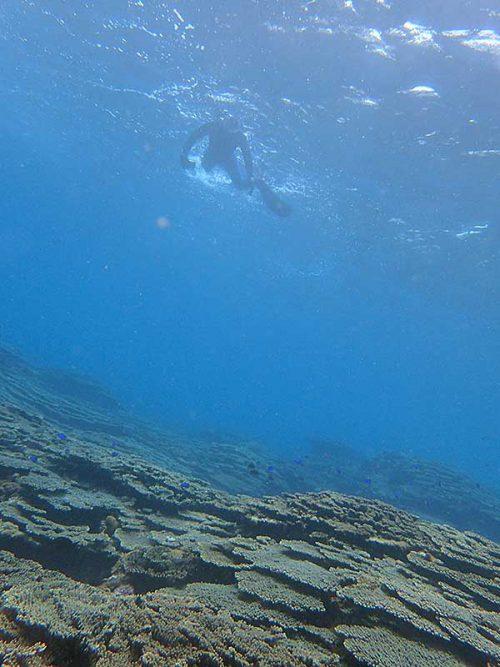 広がるサンゴを見ながら泳ぎ
