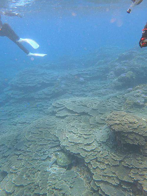 サンゴの間で休憩していたウミガメ見たり