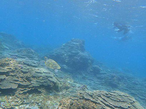 泳いで周ればちょっと沖にもウミガメおりまして