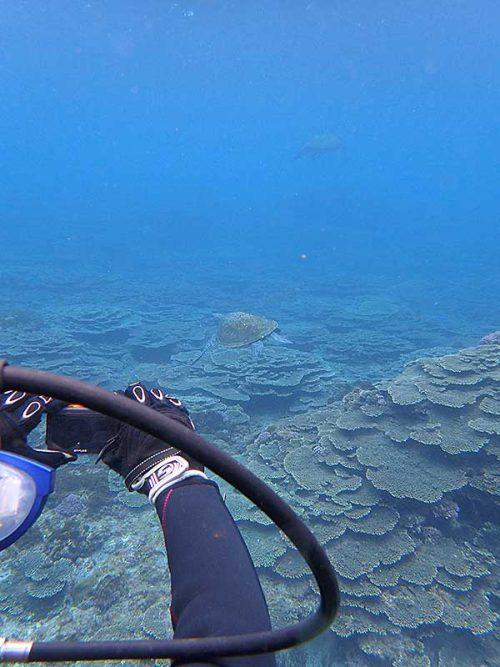 今日はウミガメたくさん見かけ