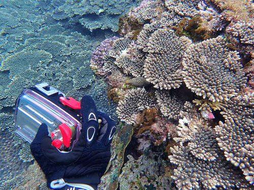 サンゴの間にウツボもいたり