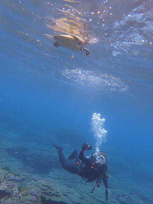 下からウミガメ眺めたり
