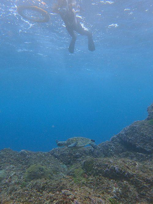 沖でてウミガメ見てみたり
