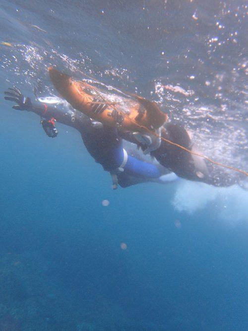 海慣れつつ泳いで行って