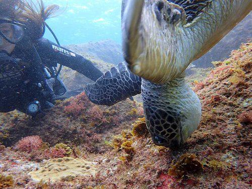海草食べるウミガメ眺め