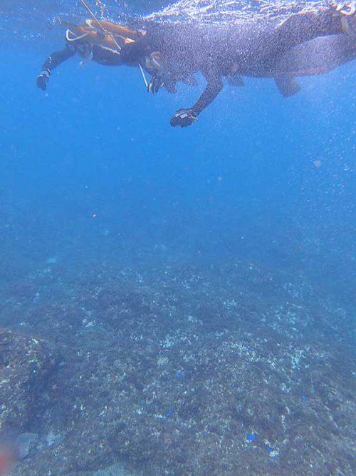 水底付近にはソラスズメダイとかいたりして