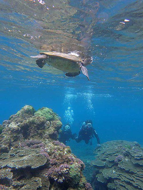呼吸しに上がって行ってたアオウミガメ
