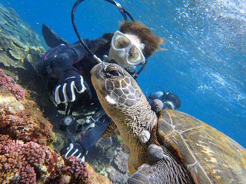 目の前ウミガメ泳いできてて