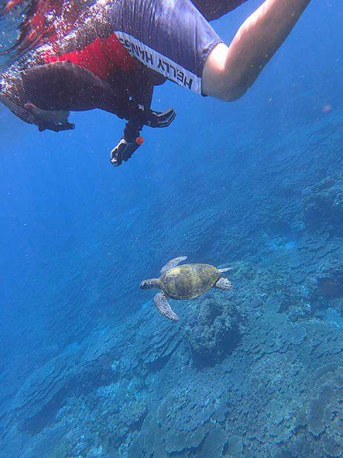 ウミガメと一緒に泳いで底土を周っていって