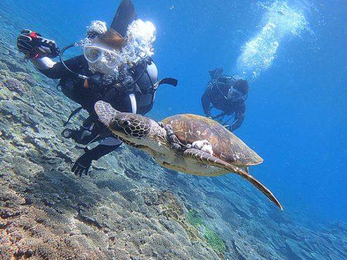 ウミガメと一緒に泳いで周っていって