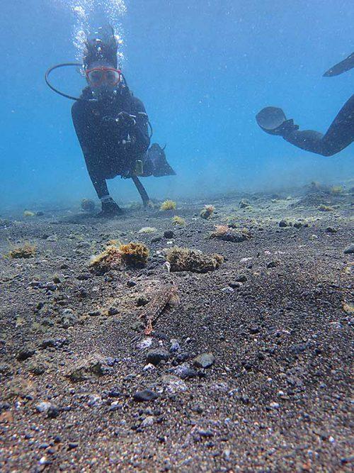 砂地の上にも魚はいたり