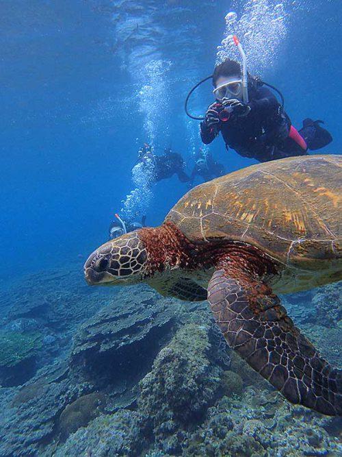 沖出る途中でウミガメ見つけ