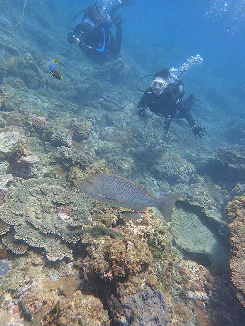 ハマフエフキにちょっと大き目な魚もついてたり