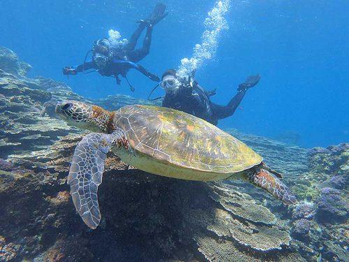おっきなウミガメと一緒に泳ぎ
