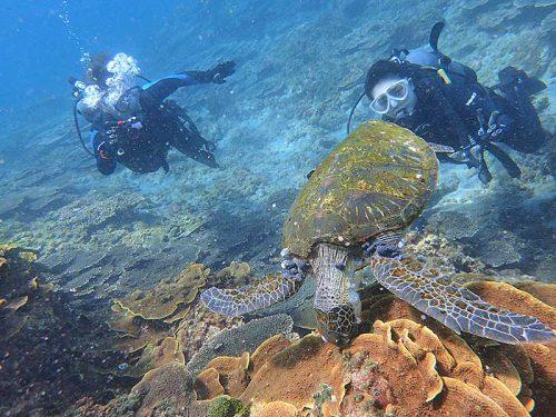 モシャモシャ海草食べてたアオウミガメ