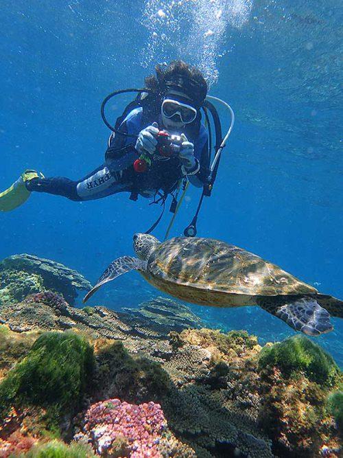 浅場でウミガメ撮ったり見たり