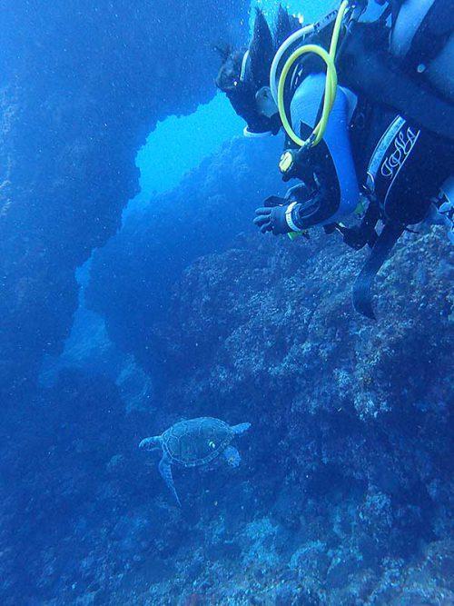 アオウミガメもたくさん見かけ