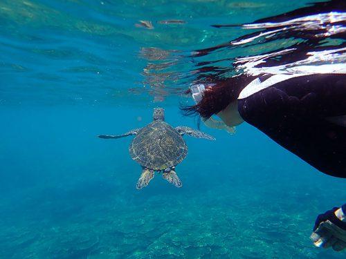 ちっこいウミガメ泳いで上がってきていたり