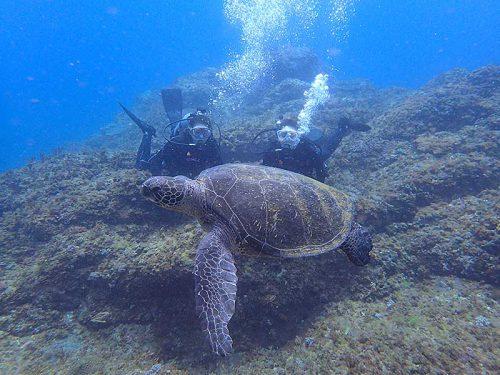 間近で大きなウミガメ見てみたり