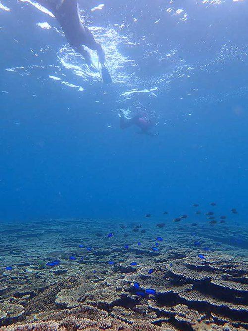 サンゴの上には綺麗な魚がたくさんで