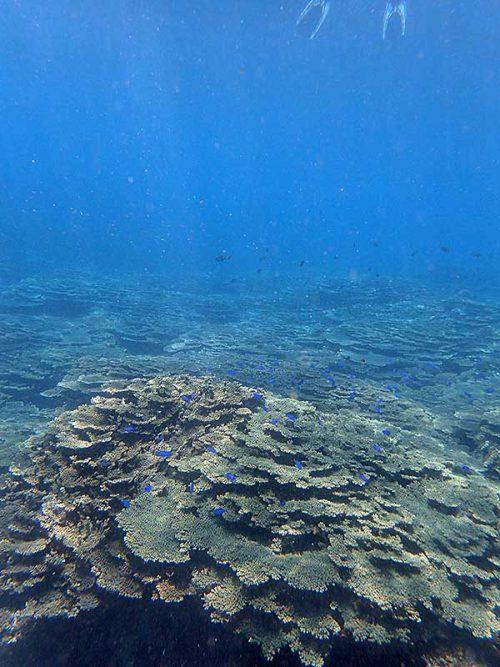 サンゴの上には綺麗な魚もたくさんで