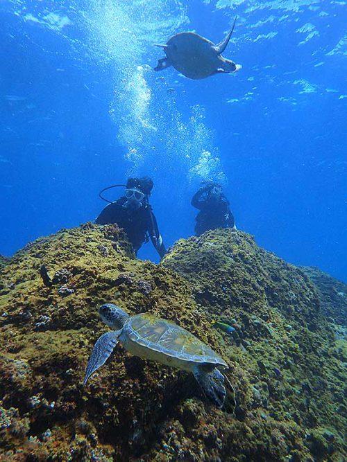 上にも下にもアオウミガメ
