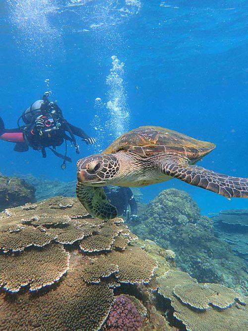 近くでウミガメ撮ってたり見たり