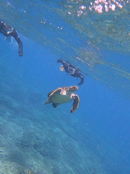 のんびり泳ぐウミガメ眺め