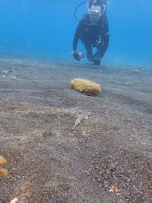 砂の上にはコブヌメリとか