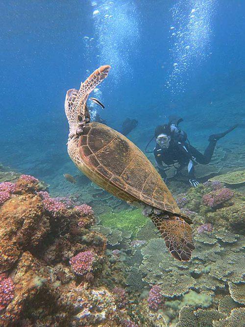 ホンソメワケベラにクリーニングされてたアオウミガメ