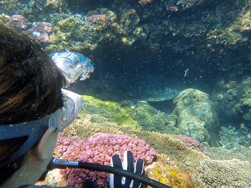 小穴にハマってたちょっと大きなアオウミガメ