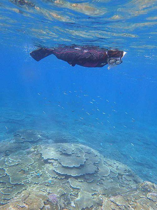 魚も見つつ泳いで周り