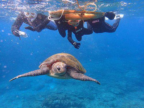 ゆっくり近づきウミガメ間近で見てみたり