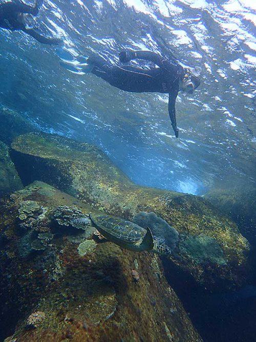テトラの近くでのんびりしてたアオウミガメ