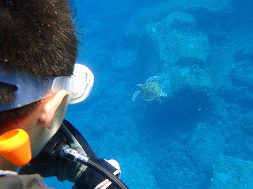 ウミガメと一緒にちょこっと泳いで周りつつ